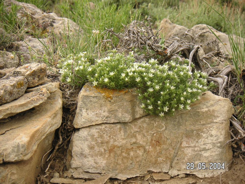 Native plant draping over rocks