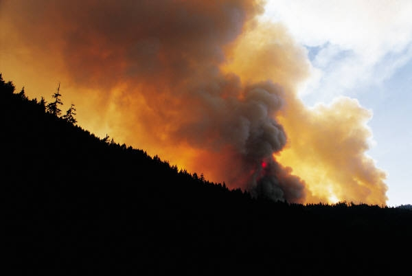 Forest fire, wildland fire