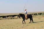 RAnch Roping Calves