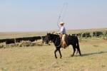 RAnch Roping Calves