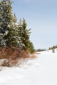 Mountain snowpack provides stream flow water well into the summer months, and recharges springs and seeps.