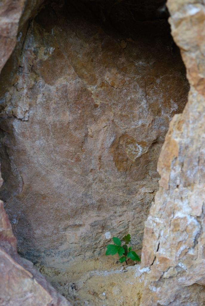 shrub seedling rock wall