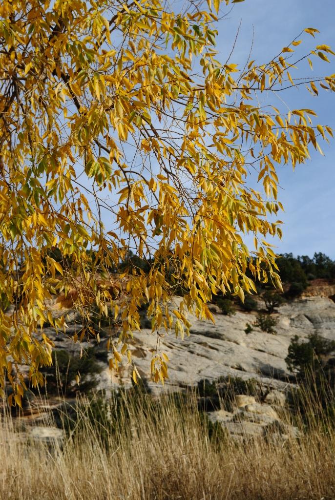 Autumn_lvs_1