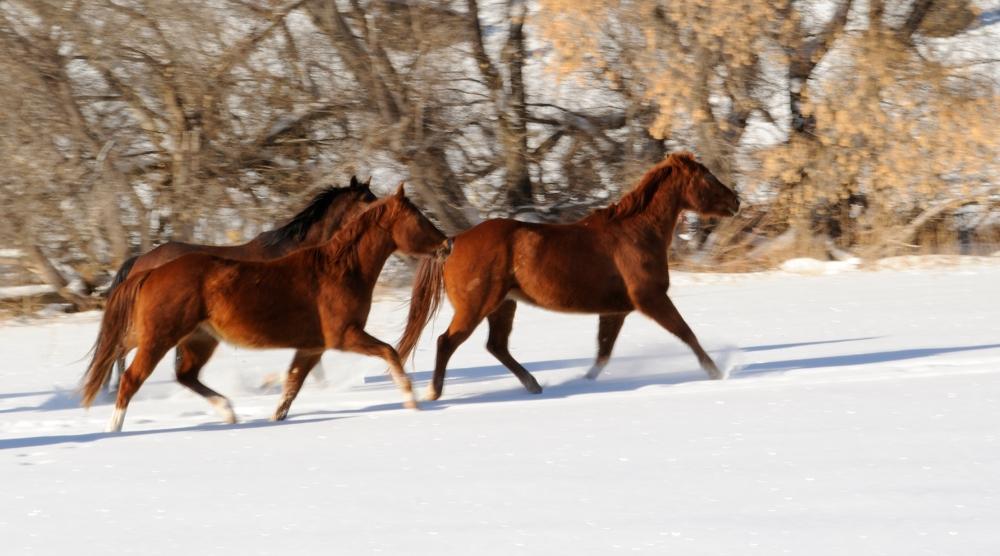 wyoming horses