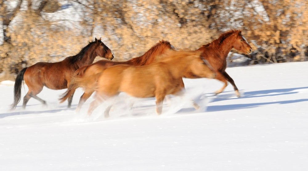 horses wyoming snow