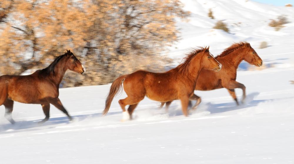 wyoming winter horses