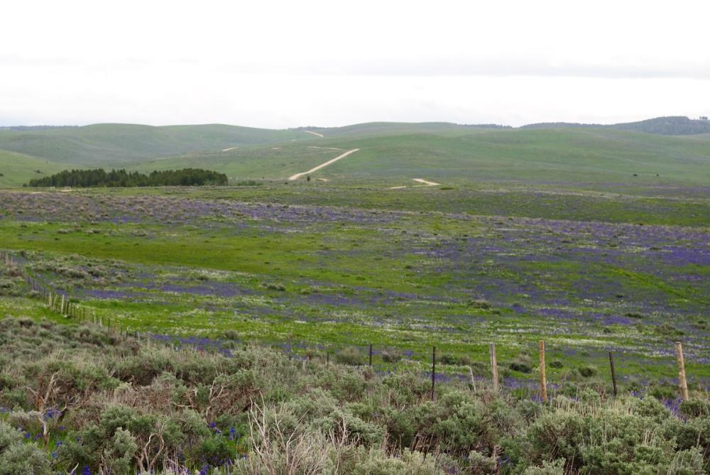 Keep Wyoming Wild