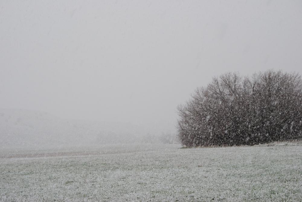 spring_snow_